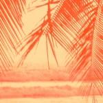 palmneonred